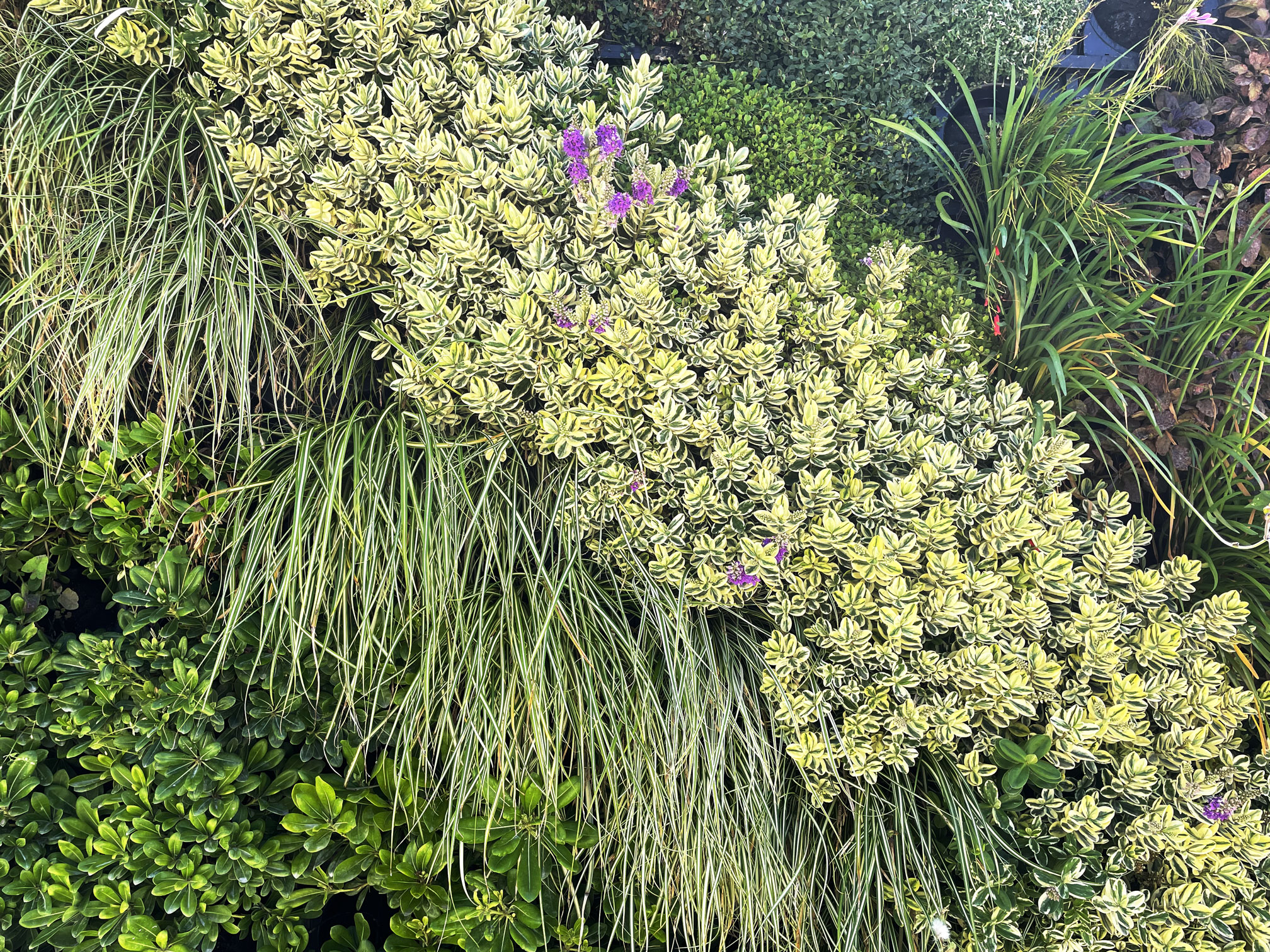 jardin-vertical-textura